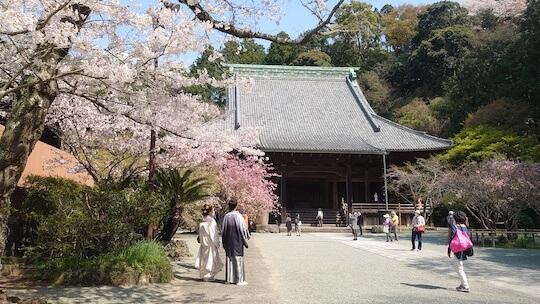 桜鎌倉ウェディングフォト