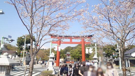 鎌倉八幡桜鳥居